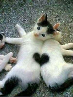 猫を飼う前に前もって知っておいた方が良いことのまとめ