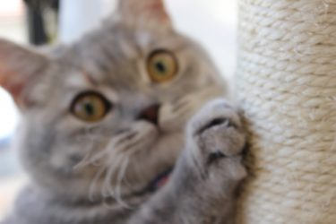 猫を飼うと爪とぎが困る。爪とぎ対処のしかた