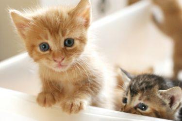 猫を初めて飼う人が後悔する前に猫の習性や特性を知ろう
