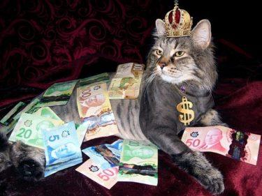 猫を飼うのに必要な費用は?