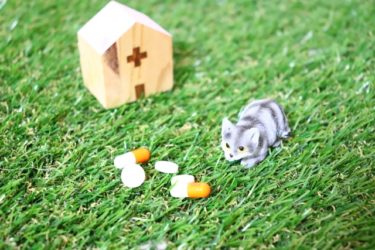 猫を飼ったら動物病院を探そう!
