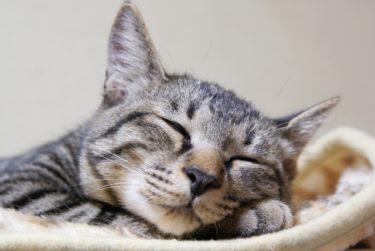 猫を飼う8つのメリット7つのデメリット7匹の猫と暮らし率直に実感するところ